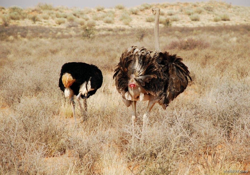 Photo Galleries | South Africa wildlife